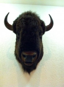 Bison (déco)